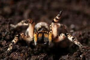 Gigitan Labah-Labah (Spider Bites) - Simptom, Punca, Diagnosis, Faktor Risiko dan Rawatan