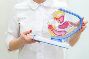 Rahim : Ketahui lebih banyak mengenai organ reproduksi ini