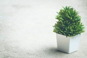 Pokok Hiasan Dalam Rumah Boleh Memudaratkan Kesihatan