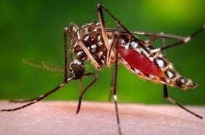 Apa Yang Harus Anda Ketahui Mengenai Demam Chikungunya?